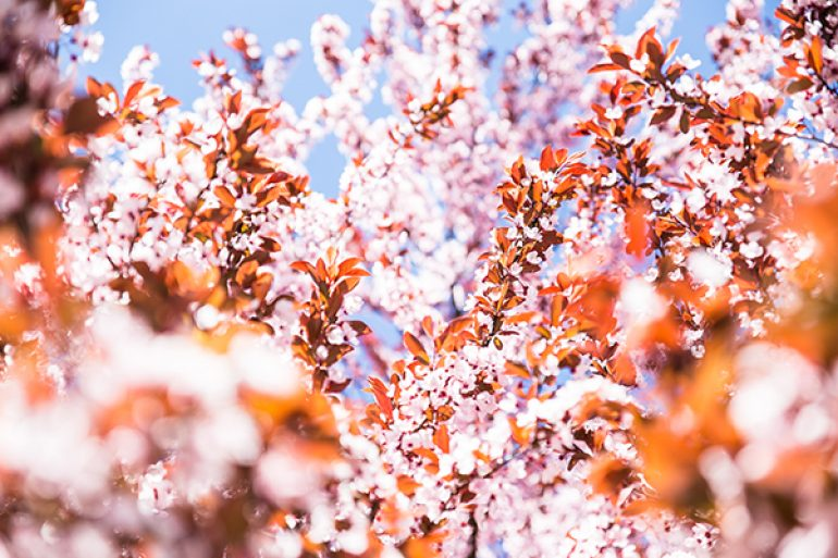 Frühling lässt sein blaues Band wieder flattern durch die Lüfte